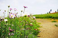 田野花卉风景