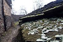 山村老房子上的落叶