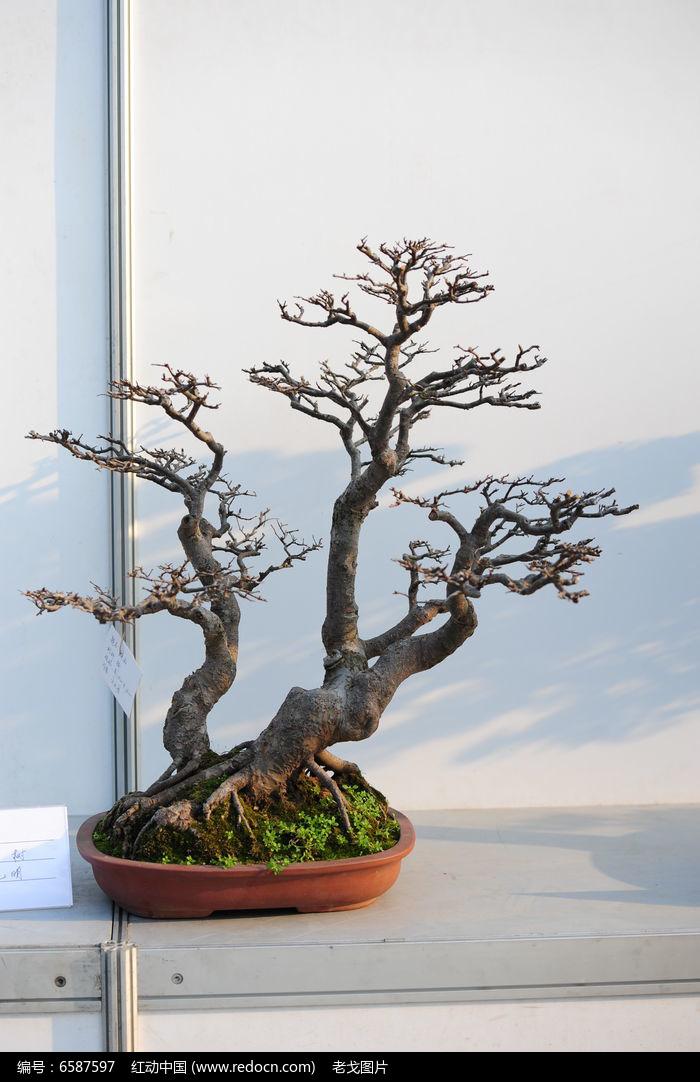 榆树茁壮图片,高清大图_树木枝叶素材