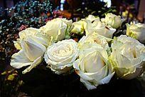 白色玫瑰花