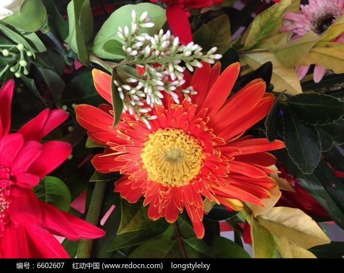 原创摄影图 动物植物 花卉花草 红色鲜花