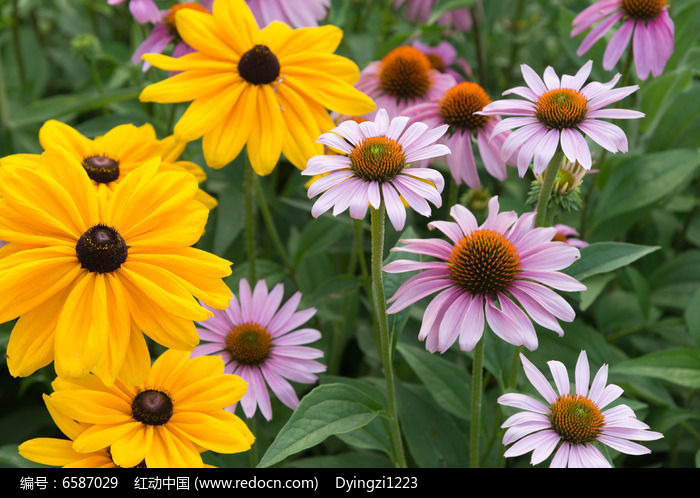 原创摄影图 动物植物 花卉花草 花朵素材