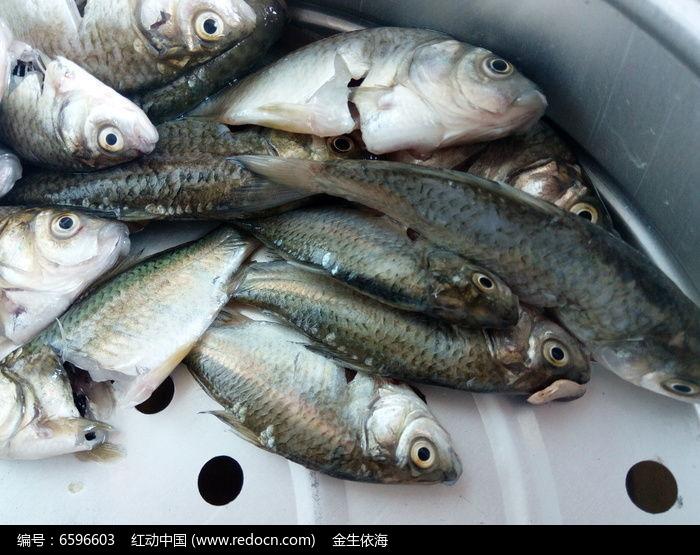 小鱼图片,高清大图_水中动物素材