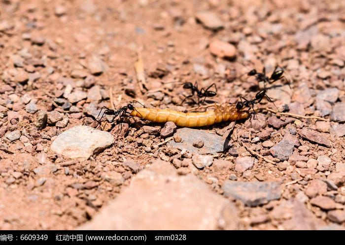 动物吃蚂蚁图片