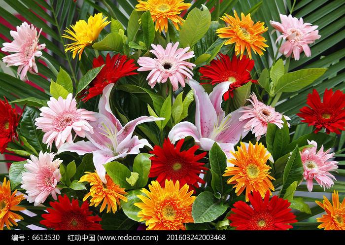 原创摄影图 动物植物 花卉花草 各种鲜花