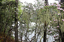 湖畔小树林
