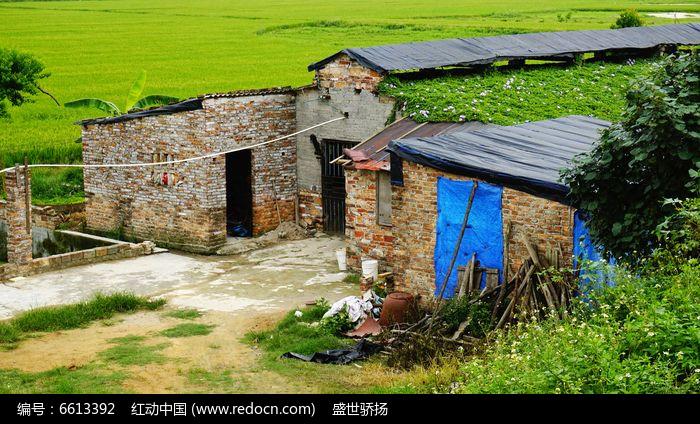 农村生态猪场图片
