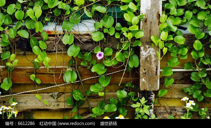 原创摄影图 动物植物 花卉花草 藤蔓植物叶子
