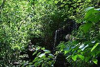 阳光下的树林摄影