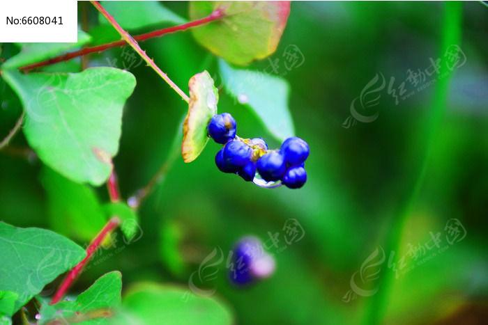 原创摄影图 动物植物 花卉花草 雨后植物