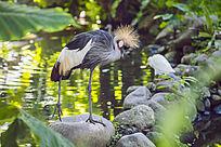 白鹤 鹤顶红树林