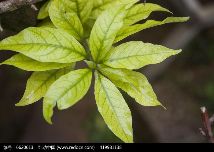 原创摄影图 动物植物 花卉花草 翠绿的植物叶子  请您分享: 红动网