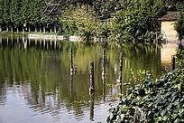 立在湖面的图腾木柱