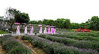 仙女下凡薰衣草园