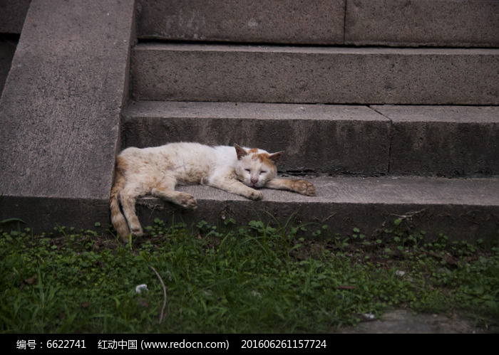 玄武湖小憩的猫标本图片,高清大图_陆地动物素材