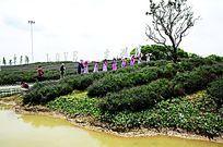 薰衣草花园