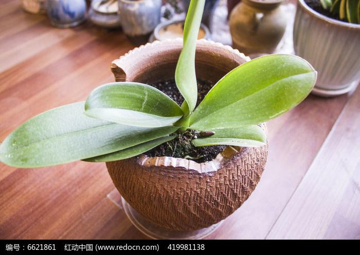 原创摄影图 动物植物 花卉花草 残缺陶罐里的绿色植物