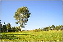 长春世界雕塑公园景观植物