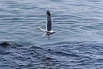 蓝色海面上飞翔的海鸥