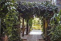 满是绿藤的小庭院