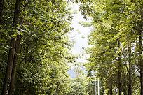阳光下的翠绿树林