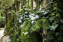 栅栏外的绿植