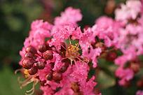 花与花苞争艳
