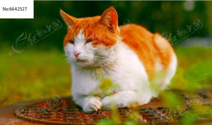 原创摄影图 动物植物 陆地动物 卧着的小猫  请您分享: 素材描述:红动