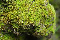 岩石上的青苔