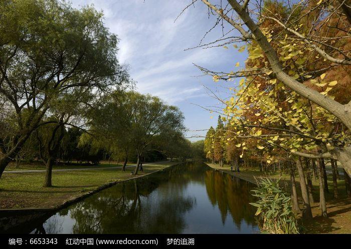 原创摄影图 自然风景 森林树林 河边银杏树  请您分享: 素材描述:红动