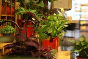 家用小清新盆栽