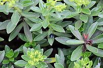 花中张望的金龟子
