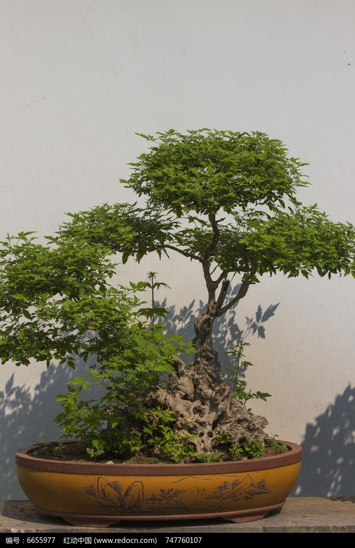 原创摄影图 动物植物 树木枝叶 假山盆景
