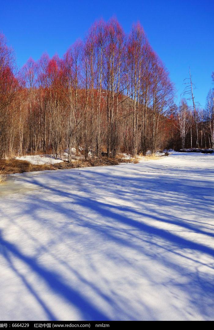 原创摄影图 自然风景 森林树林 林海雪原红柳