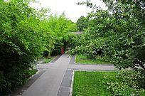 绿色植物中的庭院
