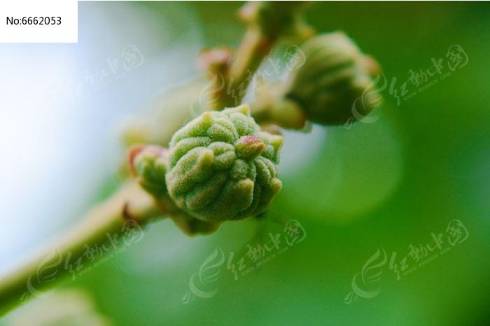 原创摄影图 动物植物 农作物 农作物果实