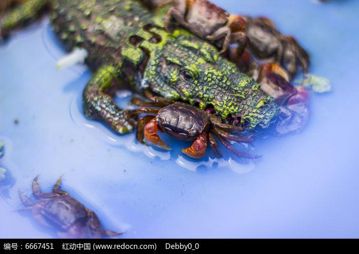 原创摄影图 动物植物 水中动物 水生宠物