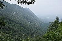 树林覆盖的山脉-山川自然风景