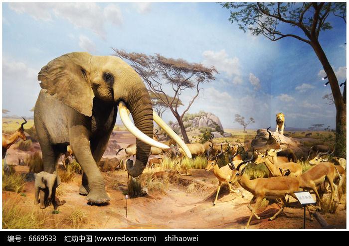 非洲象标本图片,高清大图_陆地动物素材