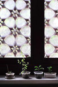 古窗前的绿植