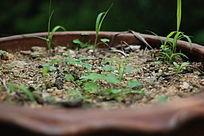 花盆中的青草
