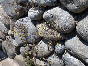 磊石围墙局部