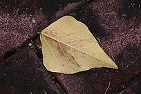 落在地上的落叶