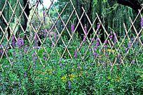 紫色花草与竹篱笆