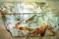 长鳍鱼化石