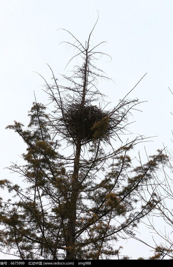 冬日里树枝头的鸟巢