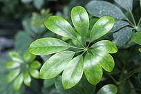 朵花形的绿植叶片