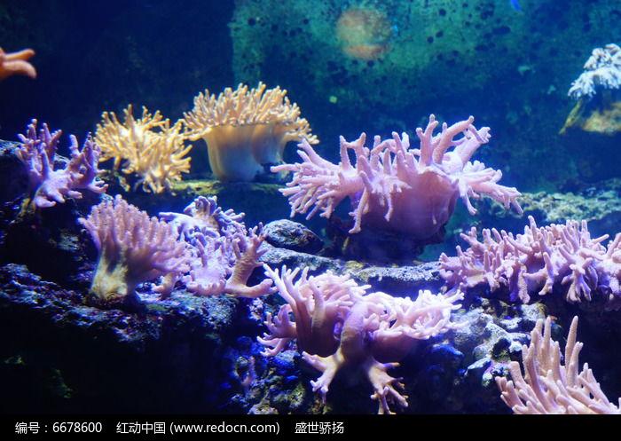 海洋珊瑚馆图片,高清大图_水中动物素材