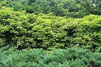绿色层叠交替的绿色森林