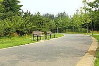绿色森林公园道路旁的公共座椅